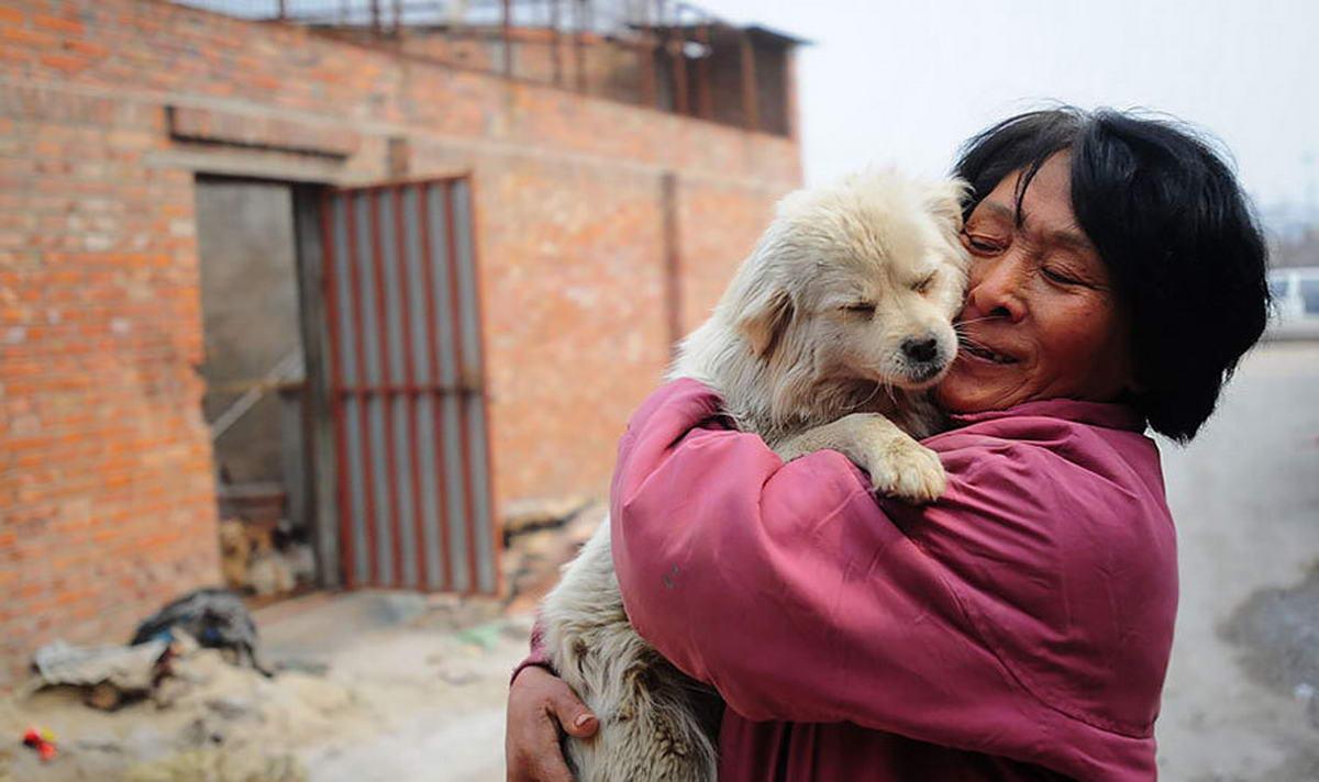 Пенсіонерка врятувала близько тисячі собак від китайського м'ясного фестивалю