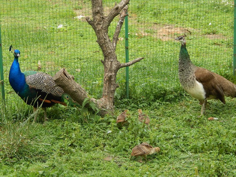 У Луцькому зоопарку поповнення в пернатих