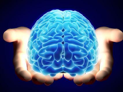 Американські вчені виростили в лабораторії людський мозок