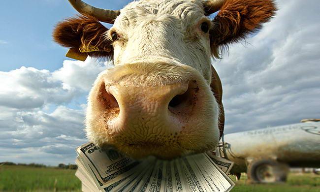 Збитки від зниження цін на молоко фермерам покриє Єврокомісія