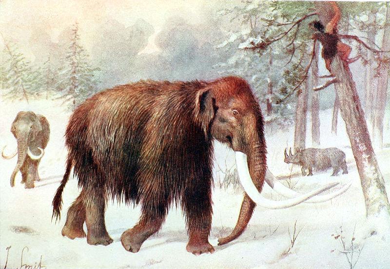Якутські вчені знайшли фрагмент шкіри мамонта, придатний для подальшого клонування