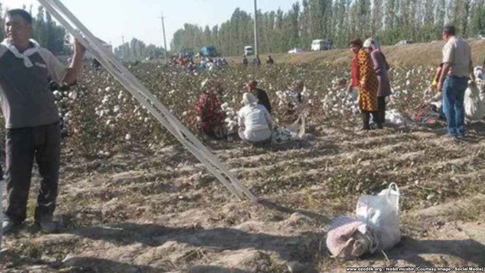 Узбецьких селян змусили приклеїти назад зібрану бавовну, щоб порадувати око Прем'єр-міністра