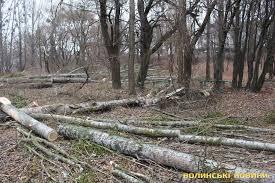 На Волині затримано чоловіка, який займався незаконною вирубкою дерев