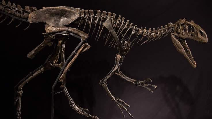 У Британії вперше продадуть на аукціоні останки динозавра
