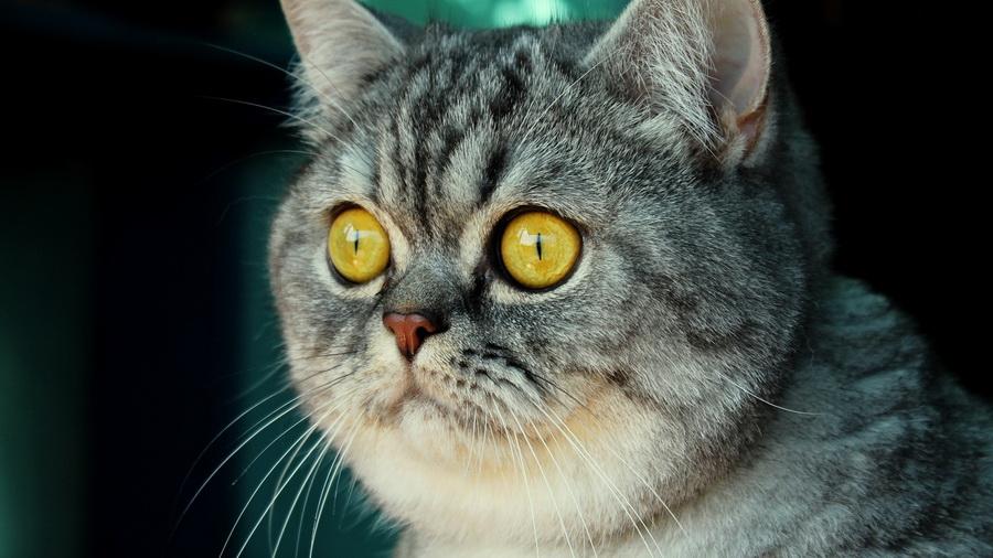 Бродячі коти успадкували квартиру в Центрі одного з найбільших італійських міст