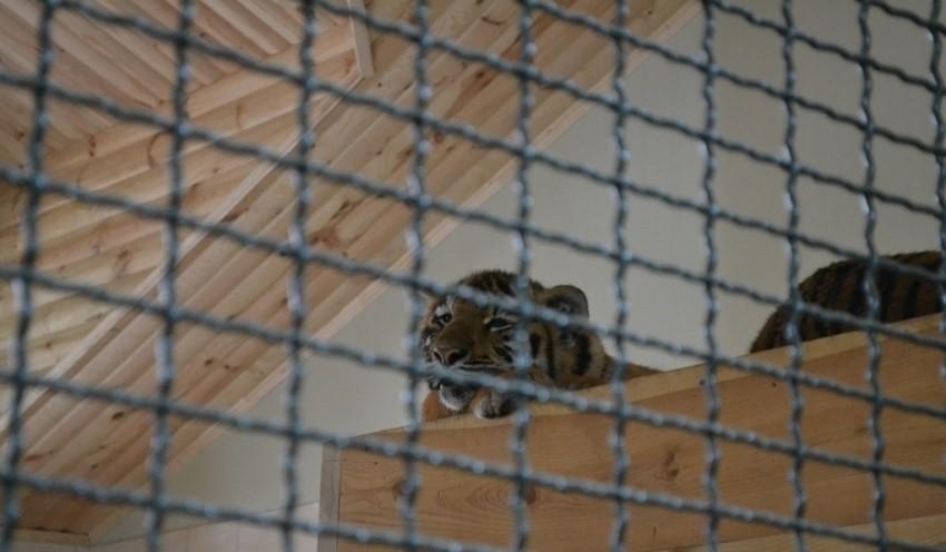 У луцькому зоопарку збудують нові вольєри