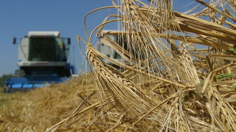Обсяги сільськогосподарського виробництва скоротилися за 11 місяців на 4,7%