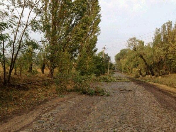 Сильні пориви вітру знеструмили 21 населений пункт Волині