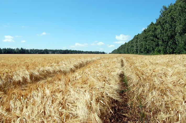 Аграрний сектор України забезпечив 37% валових надходжень від загального експорту