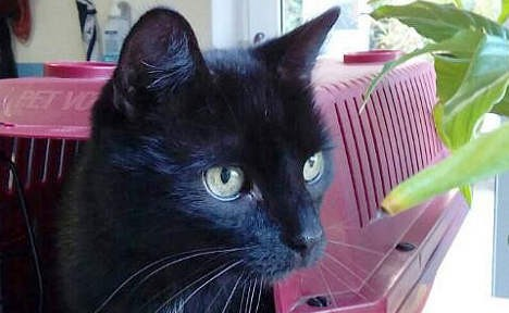 У Німеччині знайшли кота, який загубився 10 років тому