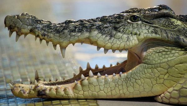 У США злодій, втікаючи від поліцейських, потрапив просто у пащу крокодила