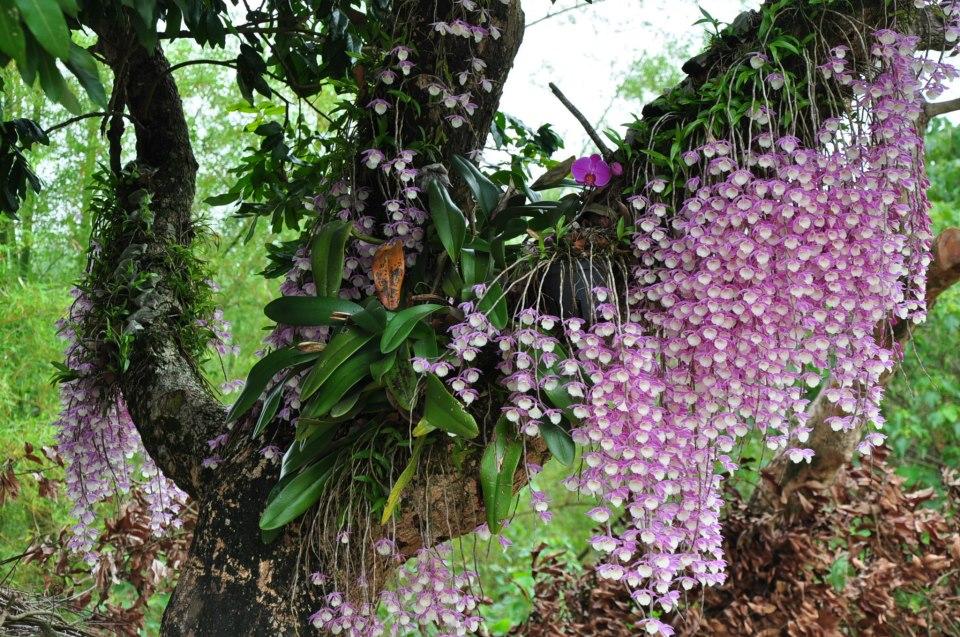 У Чехії рятуватимуть квіти від глобального потепління