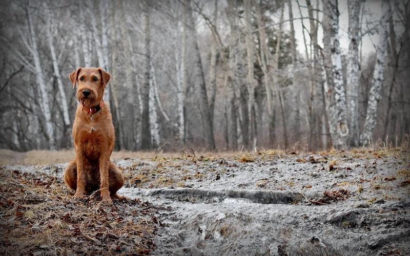 На Полтавщині бездомний пес врятував жертву ДТП