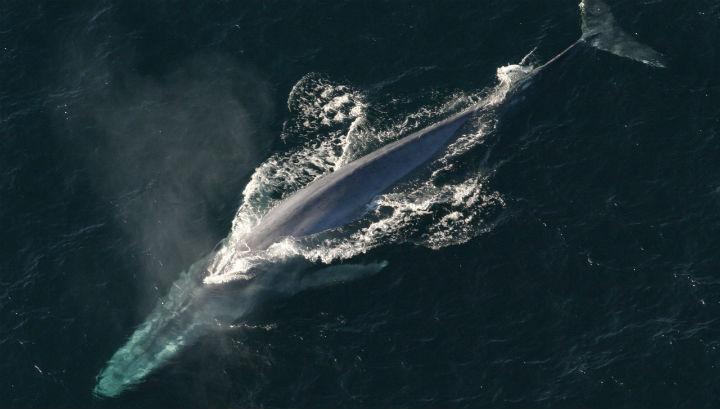 Японське судно зіткнулося з китом: є постраждалі