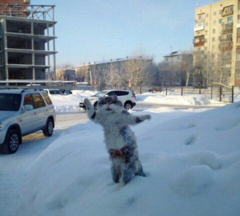 Російські студенти зробили з мертвого кота пам'ятник зимі