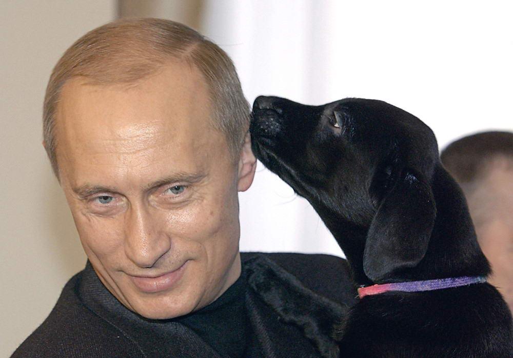 Bild викрив брехню Путіна про собаку