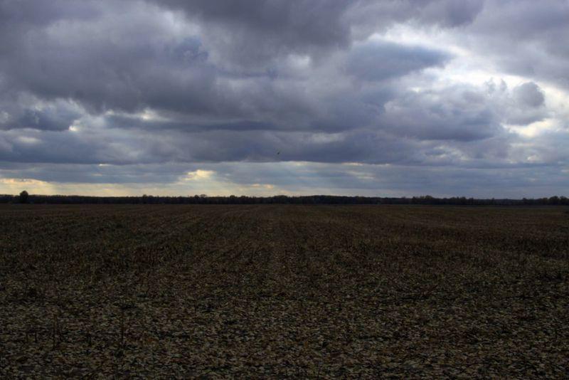 На Волині власникам земельних паїв вже виплачено 151 млн грн орендної плати