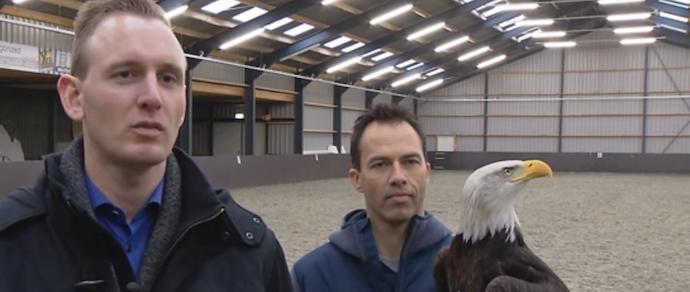 Поліція Голландії натренувала орла для перехоплення дронів