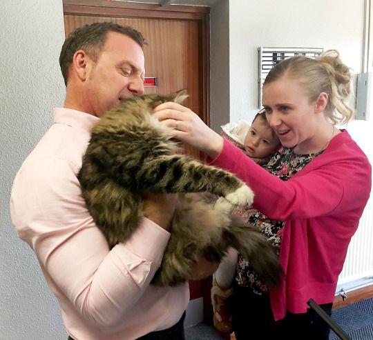 У Британії зниклого кота знайшли через 14 місяців на фабриці зоокорму
