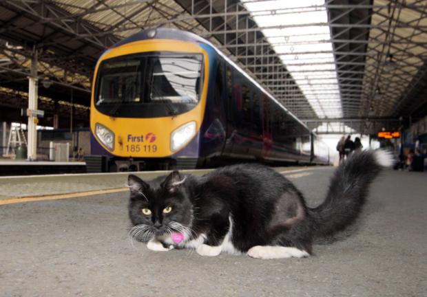 У Великобританії кішку призначили контролером залізничної станції