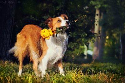 Британські фахівці розробили IQ-тест для собак