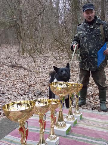 За титул польового чемпіона по підсадному кабану змагаються мисливські собаки трьох областей