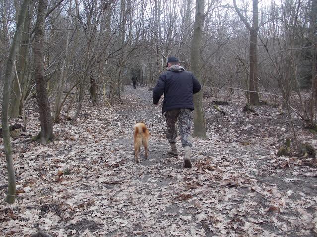 За титул польового чемпіона по підсадному кабану змагалися мисливські собаки трьох областей (доповнення)