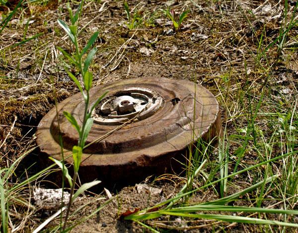 У лісі поблизу Ратного лісівники знайшли навчальну міну