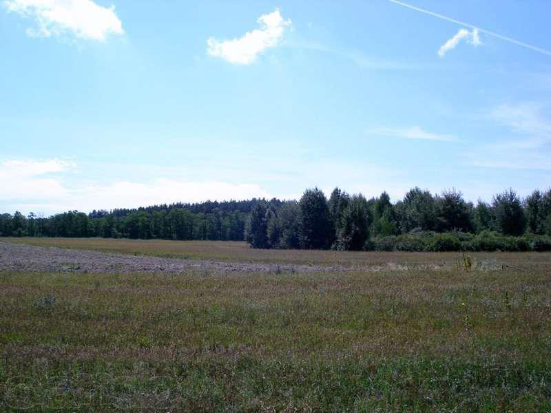 Понад дві сотні земельних ділянок готують на Волині для реалізації з аукціонів