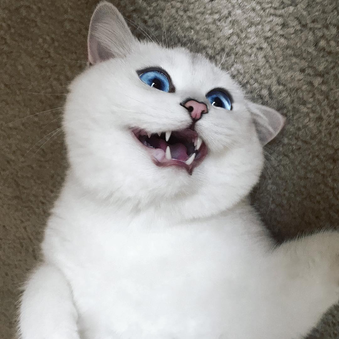 Кіт з небесно-блакитними очима став зіркою Інтернету