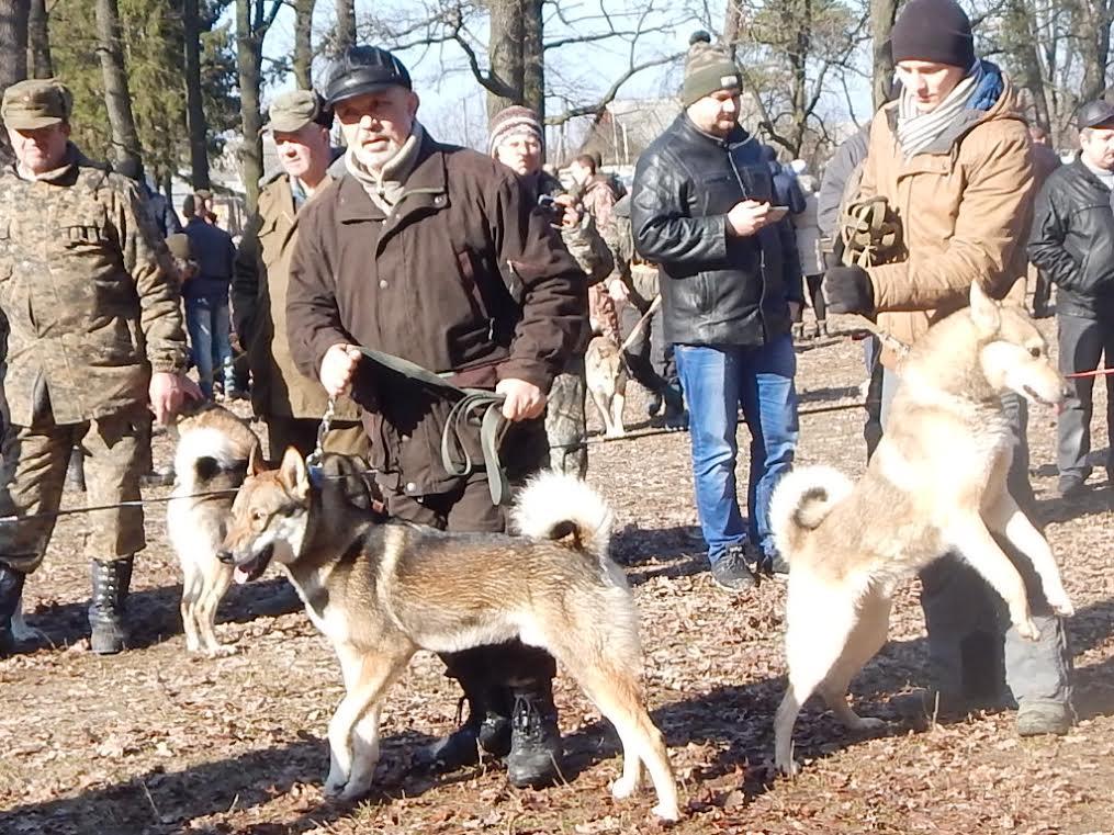 На Житомирщині відбулась IX Всеукраїнська зимова виставка мисливських лайок