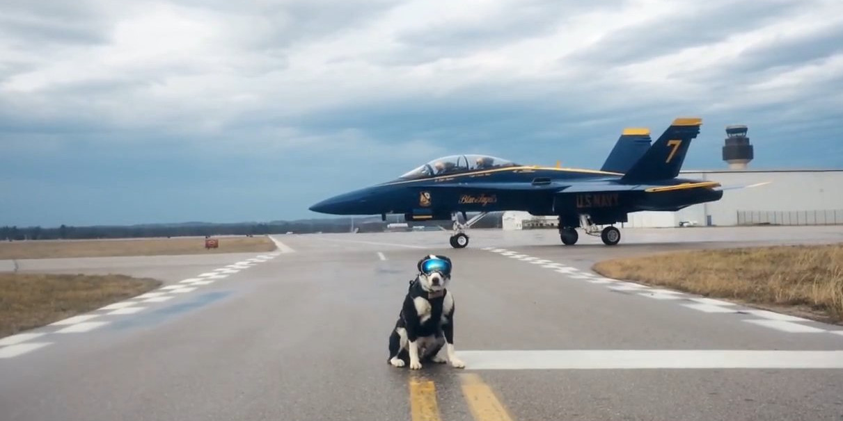 Американський аеропорт найняв пса на посаду борця з птахами