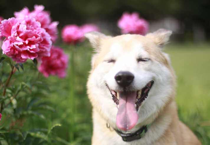 Собаки допоможуть сонливим людям