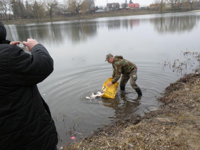 У Теремнівську водойму Луцька запущено 500 кг малька товстолоба білого та строкатого