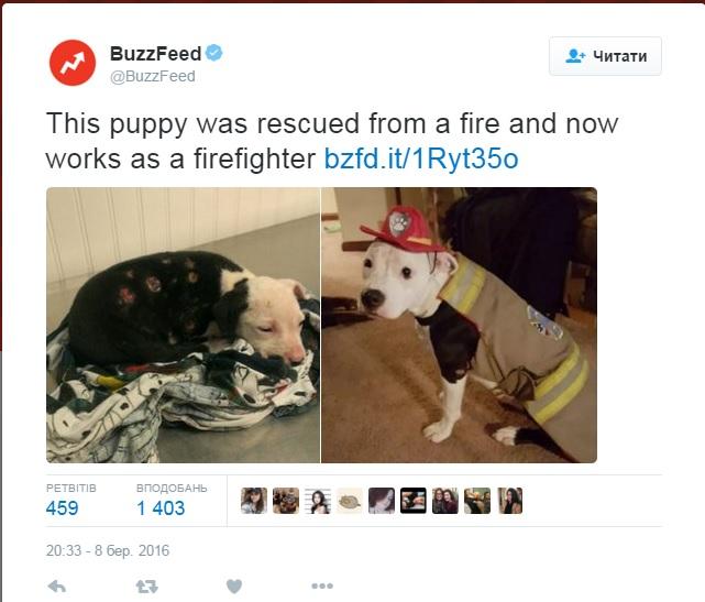 Врятований з вогню пес став пожежником