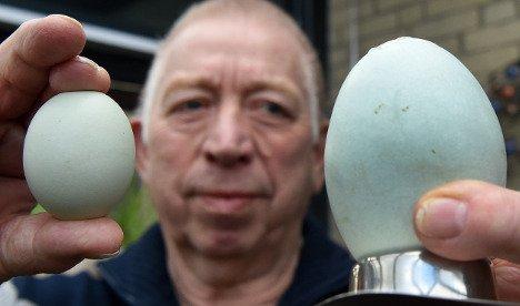 У Німеччині курка знесла «найбільше в світі» яйце