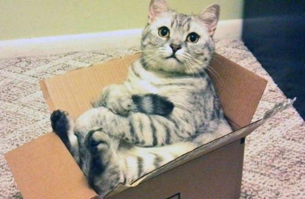 У Британії кішку помилково відправили посилкою