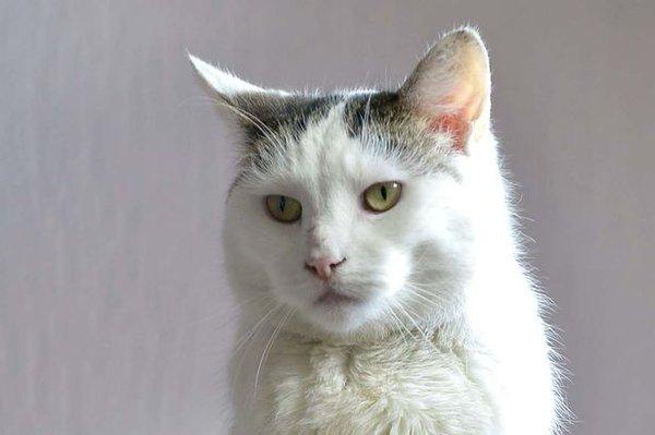 У Британії збирають гроші на операцію для кота-гермафродита