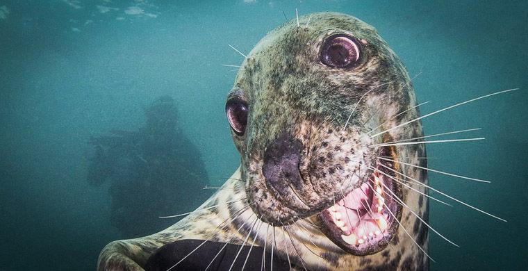 Британський фотограф зняв найдружелюбнішого в світі тюленя