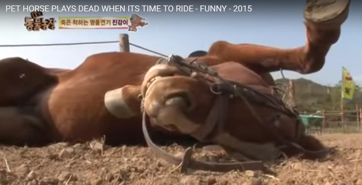Відео з конем, який прикидається мертвим, щоб не працювати, вразило Мережу