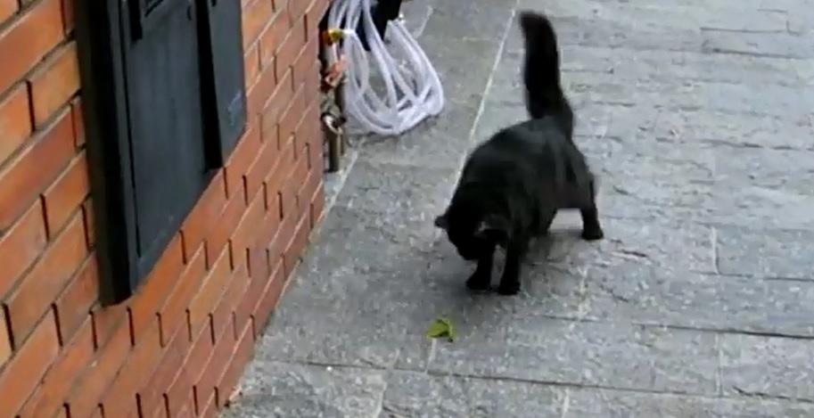 Мережу підкорює відео п'ятихвилинного двобою кота з богомолом