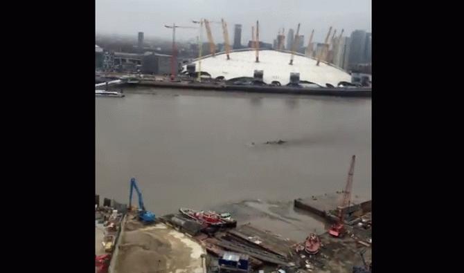 Поява невідомого об'єкта в Темзі налякала британців