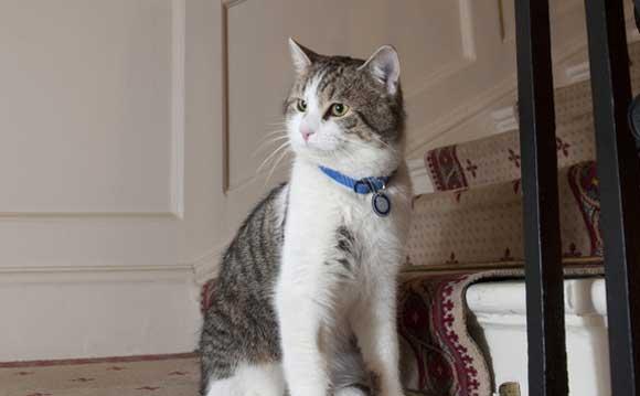 Міністерство закордонних справ Британії найняло на роботу кота