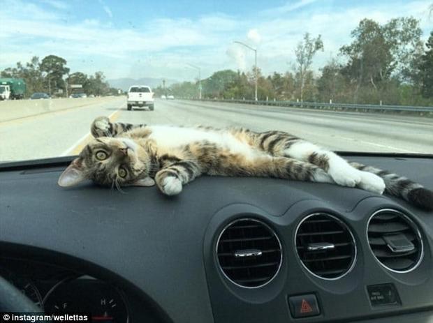 Кішка Рорі стала зіркою Мережі завдяки одному відео