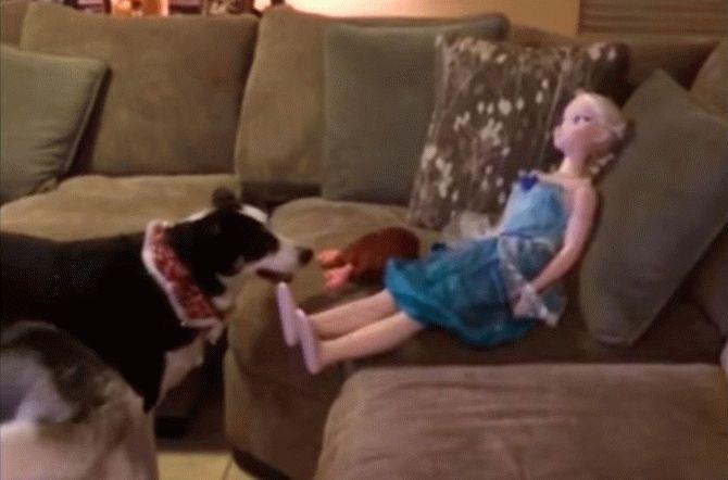 Мережу підкорило відео з собакою, яка не може відрізнити ляльку від живої людини