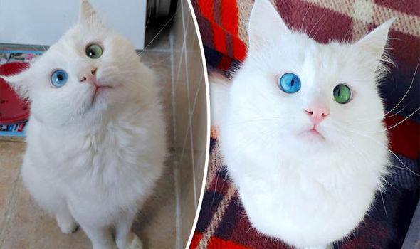 Знайдено найкрасивішого у світі кота (фото)