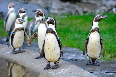 З Берлінського зоопарку вигнали пінгвінів-геїв