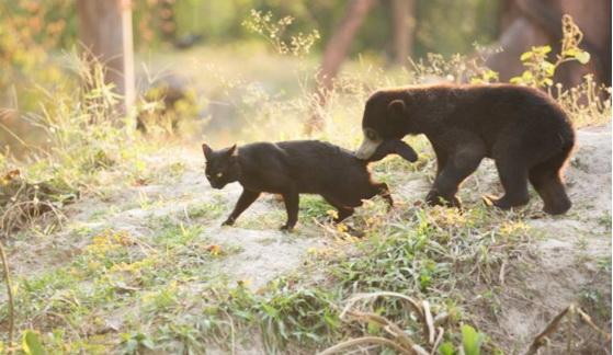 У парку диких тварин Таїланду ведмежа подружилося з кішкою