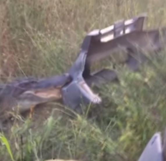 У Мережі з'явилося відео протистояння вантажівки та безстрашного крокодила