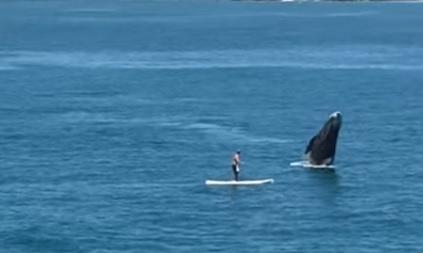 Американський серфінгіст зіткнувся з китом, який вистрибнув на поверхню води (відео)